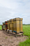 Row of wooden bee hives in a field. Row of wooden bee hives in the Dutch National Park De Biesbosch Royalty Free Stock Image
