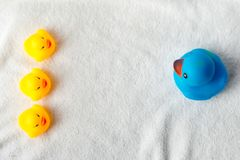 Row of yellow and blue ducks on white background. baby Flat lay. Leadership and following concept stock photos