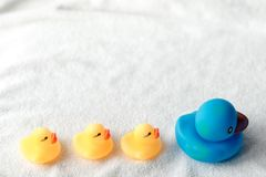 Row of yellow and blue ducks on white background. baby Flat lay. Leadership and following concept stock photo