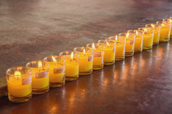 Row yellow candle grass Stock Photos