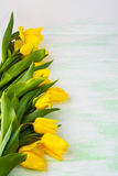 Row of yellow  tulips on light green background, vertical, copy Royalty Free Stock Photos