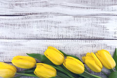 Row of yellow tulips on white rustic wooden background. Spring f Royalty Free Stock Photos