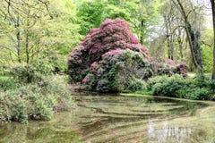 Rowallane Garden Northern Ireland. Rowallane Garden National Trust Northern Ireland beside Saintfield. Beautiful garden and manor house blooming on summer Royalty Free Stock Photos