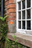 Rowallane trädgårds- nordligt - Irland Arkivfoto