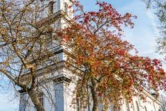 Rowan το φθινόπωρο Στοκ Φωτογραφία