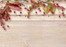 Rowan and autumn leaves on a wooden background Royalty Free Stock Photos