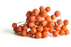 Rowan Berries Stock Afbeeldingen