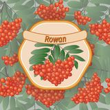 Vector rowan label Royalty Free Stock Images