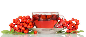 Rowan berries and cup tea with rosehips isolated on white. Royalty Free Stock Image