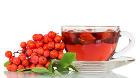 Rowan berries and  cup of tea with wild rose isolated. Stock Image