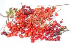 Rowan berries, hawthorn, rose hip. Various autumn red fruits - rowan berries, hawthorn, rose hip on white background Royalty Free Stock Images