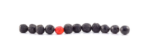 Rowan berries lie in a row. On a white background Royalty Free Stock Photos