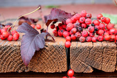 Rowan berries are scattered. On the porch of the house Stock Photography