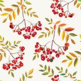 Rowan berries seamless autumn pattern Stock Photography