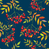 Rowan berries seamless pattern with leaves Royalty Free Stock Photos