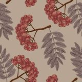Rowan. Berries. Trees. Rowan. Vector seamless pattern in vintage style. Berries on the branches of trees. Floral pattern royalty free illustration