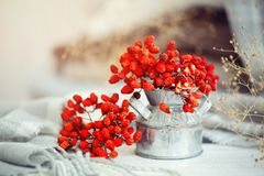 Rowan berries on a wooden table. Autumn background. Autumn still-life. Stock Images