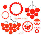 Rowan Berry Stockfoto