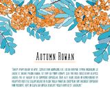 Rowan-berry background for text. Cool colors, hand drawn Stock Photos