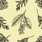 Rowan berry floral botany seamless pattern Stock Photography