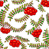 Rowan berry floral botany seamless pattern in line art style Royalty Free Stock Photo