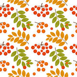 Rowan berry seamless Stock Photography