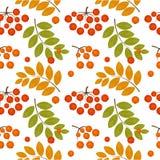 Rowan berry seamless. Ash berry seamless pattern. illustration stock illustration