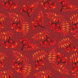 Rowan berry seamless texture. Royalty Free Stock Photography