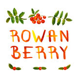 Rowan berry watercolor vintage hand drawn vector background and card with handwritten text. (with leaves and berries Stock Photography