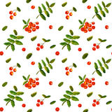 Rowan berry watercolor vintage hand drawn vector seamless pattern. With leaves and berries vector illustration