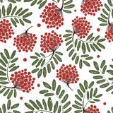 Rowan branch with berries, seamless pattern for Royalty Free Stock Photos