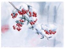 Rowan branch under the snow. Christmas card. Stock Photos
