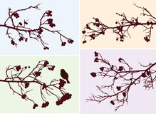 Rowan branches Royalty Free Stock Images