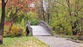 Rowan and bridge in autumn park stock video footage