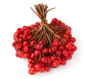 Rowan cluster. Against white background royalty free stock photos