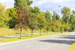 Rowan drzewa pełno czerwone jagody przy drogi stroną Zdjęcia Royalty Free