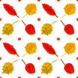 Rowan i brzozy liści akwareli rocznik wręcza bębeny Zdjęcia Stock