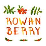 Rowan jagody akwareli rocznika ręka rysująca wektorowa karta z ręcznie pisany tekstem i tło Fotografia Stock