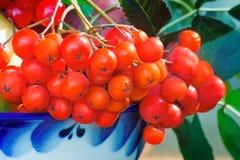Rowan jagody w pięknej ceramicznej wazie Obraz Royalty Free