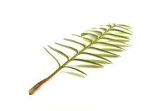 Rowan leaf Stock Photos