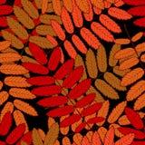 Rowan leaf Royalty Free Stock Image