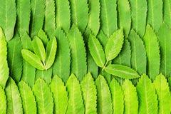 Rowan leaves. background Stock Photos