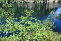 Rowan or mountain ash tree in pyrenean mountain Royalty Free Stock Photo