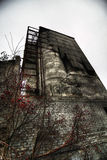 Rowan no remnanst do edifício industrial Fotografia de Stock