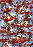 Rowan pattern. Rowan-tree and berries with titmouses on the blue background Stock Photography