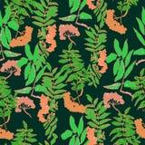 Rowan pattern. Vector seamless rowan pattern for your design Stock Image