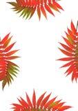 rowan piękno liści ilustracja wektor