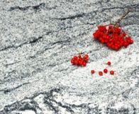 Rowan ramifica com grupos de bagas maduras no visconde Branco GR Imagem de Stock