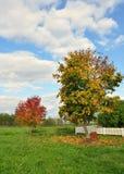 Rowan tree. Stock Photos
