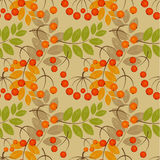 Rowan seamless pattern Stock Photos